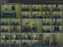 http://ist3-4.filesor.com/pimpandhost.com/1/5/6/4/156475/4/b/M/C/4bMCs/AnimalZsx%20145.avi_s.jpg